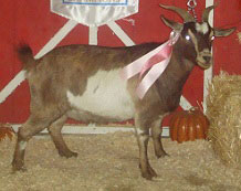 Bambi, Reserve Grand Champion Doe
