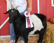 Ancient Valley Coffee Crunch Cookie ANC: 2012 Senior Champion Doe
