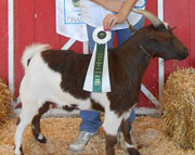 Jasper: 2012 Grand Champion Wether