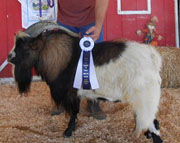 Triple T Rivers: 2012 Grand Champion Buck