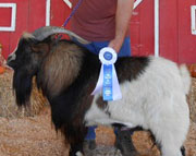 Triple T Rivers: 2012 Senior Champion Buck